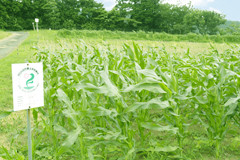 MOA自然農法文化事業団